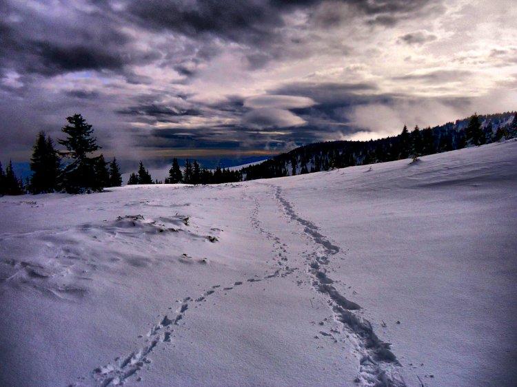 Зимни приключения в Родопите
